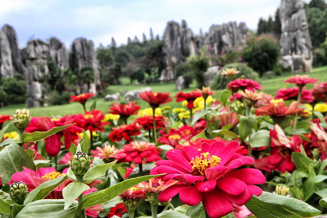 Shilin Stone Forest 石林 Kunming