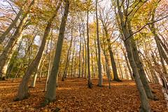Wo ist der goldene Herbst? 312/365