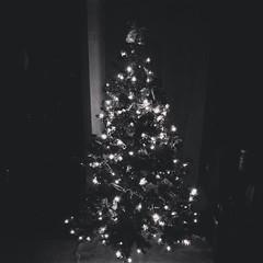 Baby tree! ♧