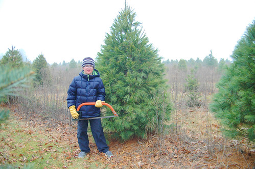 day 3073: christmas tree hunting on a not-so-snowy ridge. I.