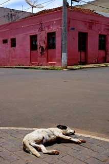 Dog sleeping on the streets of Romaria, Brasil