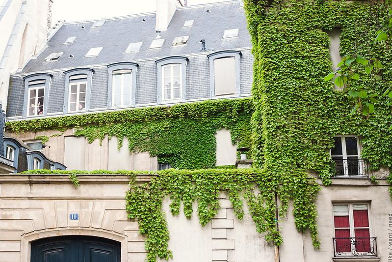 Rue de Seine, ivy