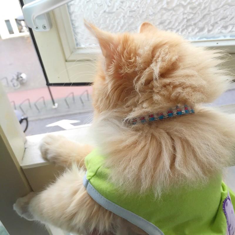 Sintra loves watching traffic through open windows