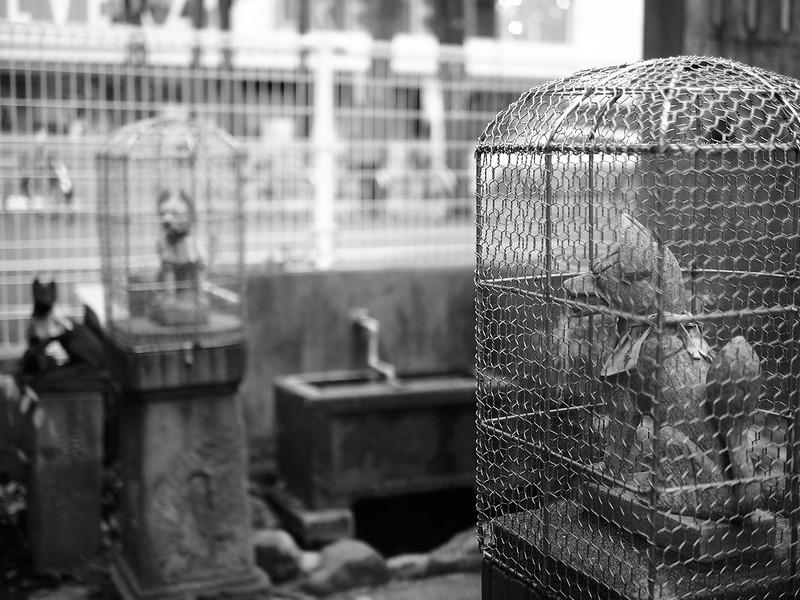 Caged...