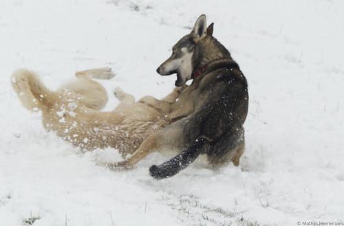Glijen door de sneeuw