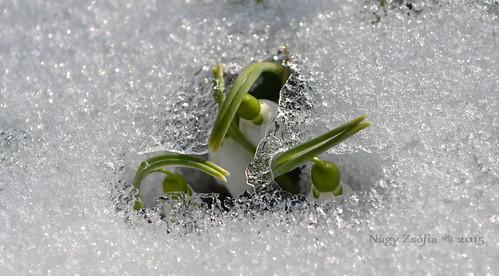 Kikelet - Spring is coming