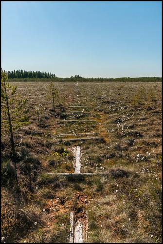 old broken decay swamp marsh trasig mosse gammal kronoby träsk förfall spång duckboards sönder brännskärrsmossen