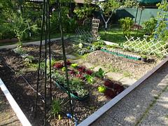 Garden Update - May 2016
