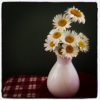 May 7 : something beginning with F -- (wild) Flowers I Found in the Fields  #fmsphotoaday #flowers