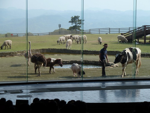 マザー牧場にいる動物たち