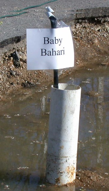 Baby Bahari sign