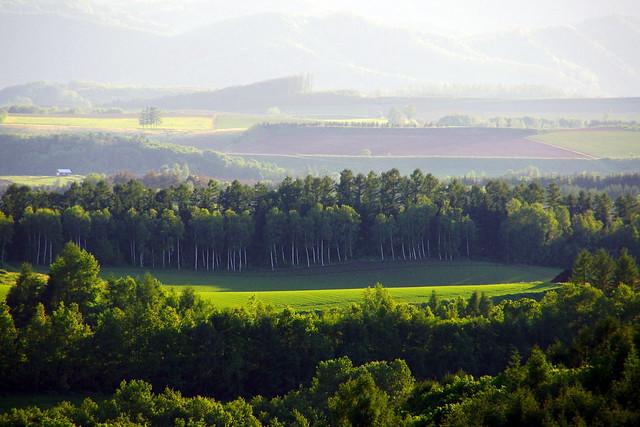 千代田の丘風景