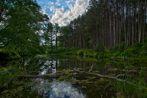 trees sky lake green nature clouds forest reflections landscape pond log scenery tall