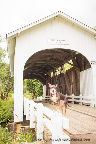 Harris Covered Bridge-4526