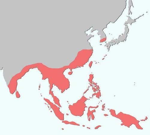 整理自 Goodwyn(2006年) ,印度大田鱉世界分布圖。(圖片來源:楊平世研究團隊)