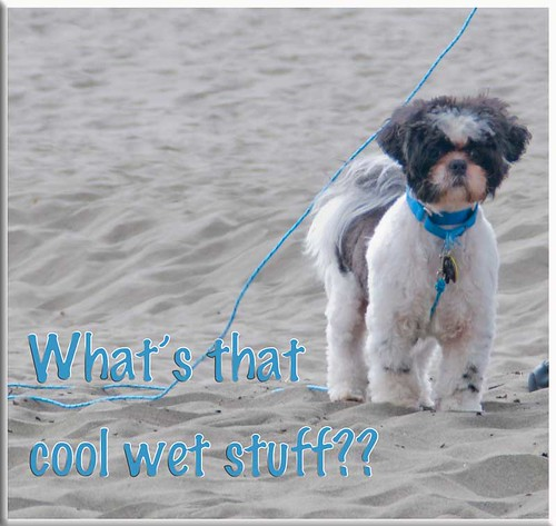 Sandy-stuff