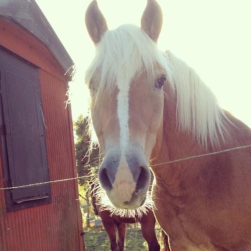 träffade en väldigt vacker hästköttslasagne i dag.