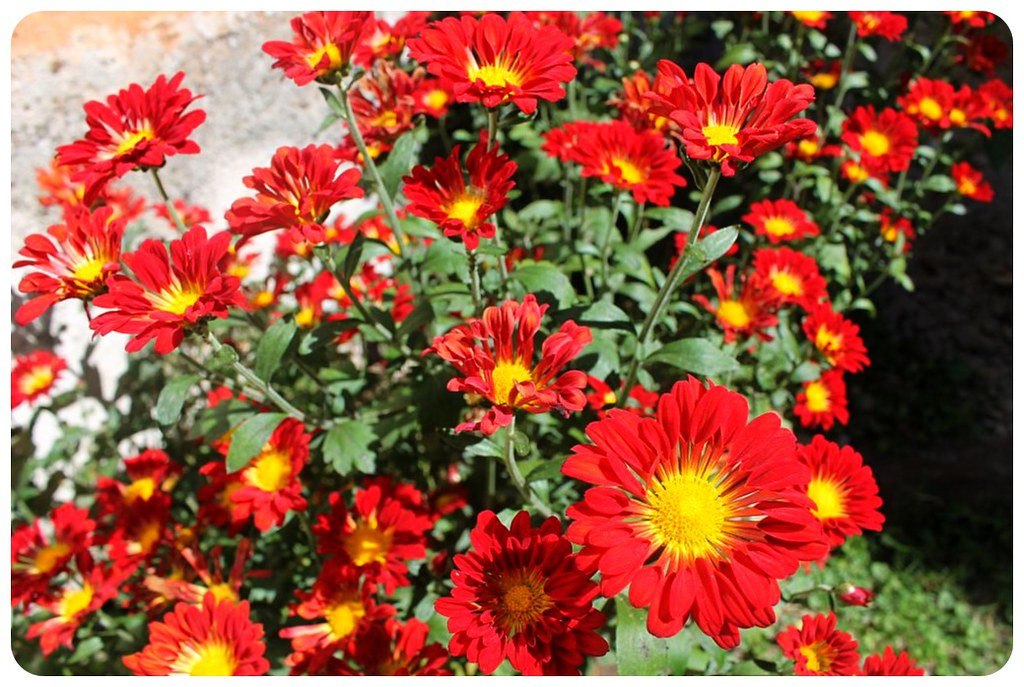 salta posada casa borgona flowers