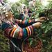 Akha farmers picking coffee cherries