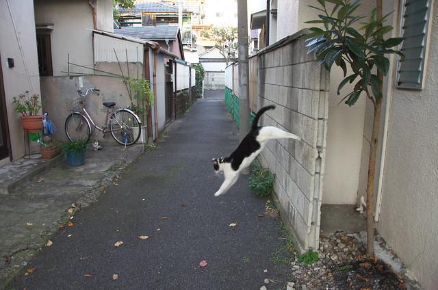 東京路地裏散歩 ネコ 2013年11月16日