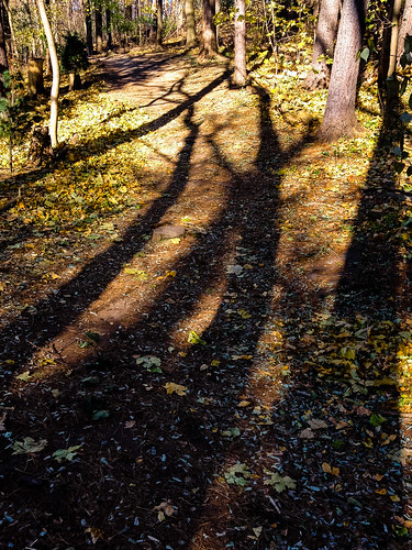 Shadow trees and the highline trail - #321/365 by PJMixer