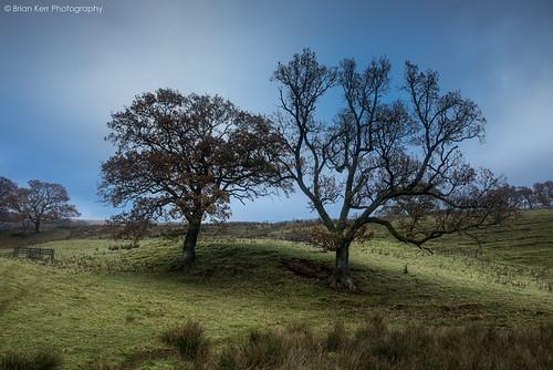 autumn trees winter landscape scotland dumfriesandgalloway mortoncastle