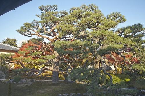 【写真】2013 紅葉 : 妙顕寺/2020-11-01/IMGP4162