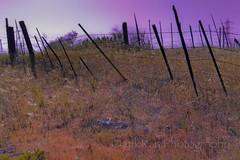 fence - purple