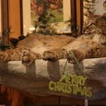 Merry X-mas cat