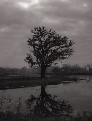 morning blackandwhite bw tree monochrome fog landscape louisiana neworleans efs1855mm explore swamp stcharlesparish bonnetcarréspillway canoneos70d