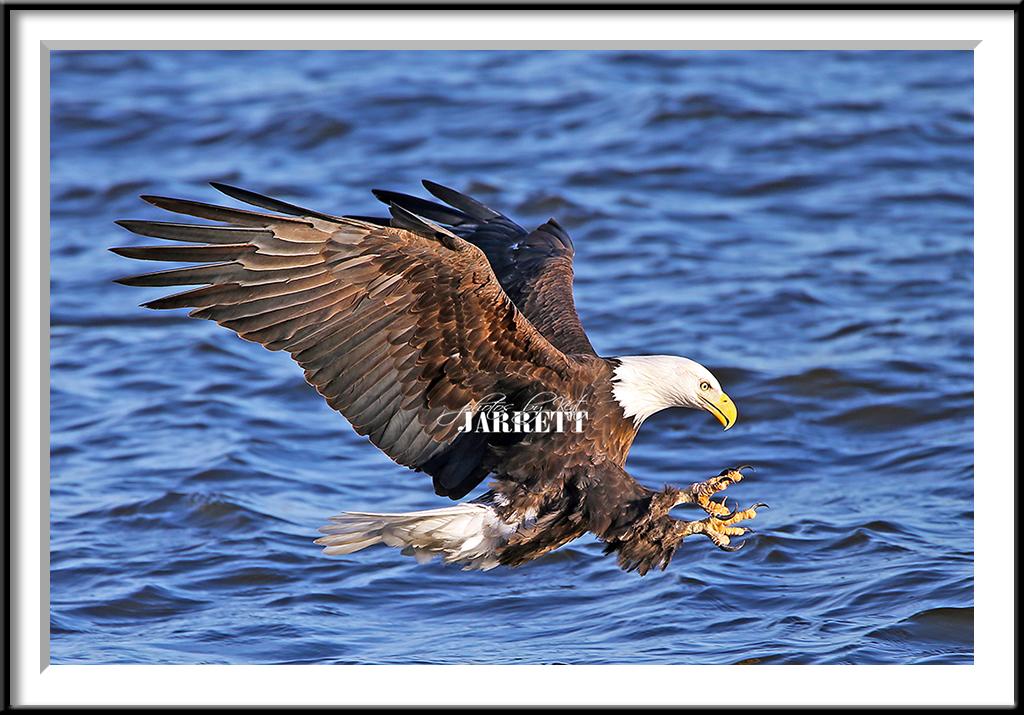 IMAGE: http://farm8.staticflickr.com/7363/11897270344_973e4f78fe_b.jpg
