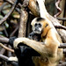 She's Gibbon All Her Love by Eddie C3