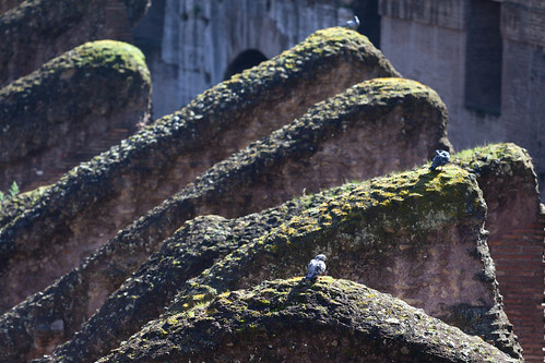 Colosseum; copyright 2014: Georg Berg