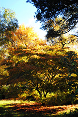 Autumn in Sheffield Park Gardens