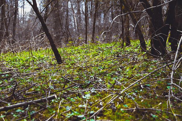 forest floor | Flickr - Photo Sharing!