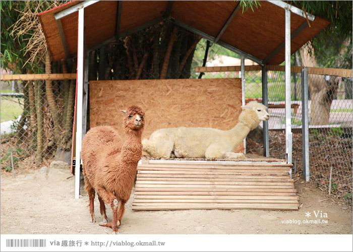 【彰化景點】克林姆莊園Cream Manor~小型動物園!戶外親子同遊好去處40