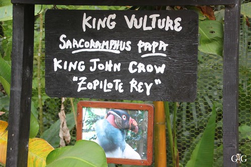 Zoo Karibikinsel Belize 19.11.2014 67