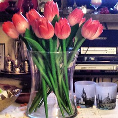 🌷🌷You know I love red tulips the most ! 🌷🌷