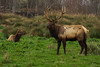 relaxed elk date in humbolt