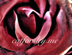 inside the rose New Logo idea Cat Forsley :copyright: