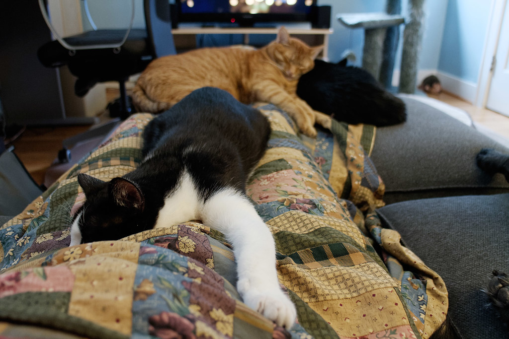 Our cats Boo, Sam, and Emma sleeping on me while our dog Ellie sleeps beside me, mostly out of frame