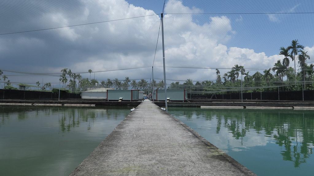 屏東鹽埔樂融融甲魚生態農場 (9)