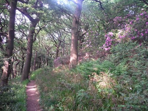 Path in Ladies' Spring Wood