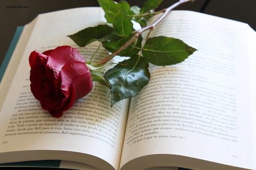Rosa e Livro by SandraFotosPortfolio