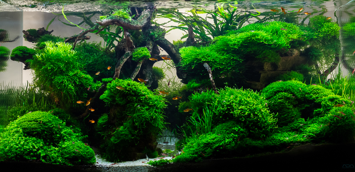 Aquascape No. 3 - ADA 90P - Moss Canyon - Final Photo on ...