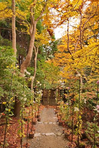 【写真】2012 紅葉 : 祇王寺/2021-09-05/IMGP7850