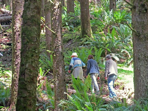 Visitors hike on the Siuslaw National Forest section of the Ya'Xaik Trail. U.S. Forest Service photo.
