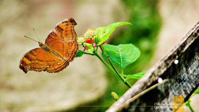 Butterfly Sanctuary at Iligan's NPC Nature's Park