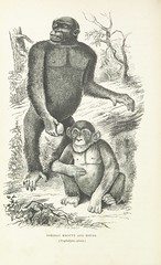 """British Library digitised image from page 442 of """"Explorations and adventures in Equatorial Africa; with accounts of the manners and customs of the people and of the chace of the gorilla, crocodile, leopard, elephant, hippopotamus and other animals. (Seco"""