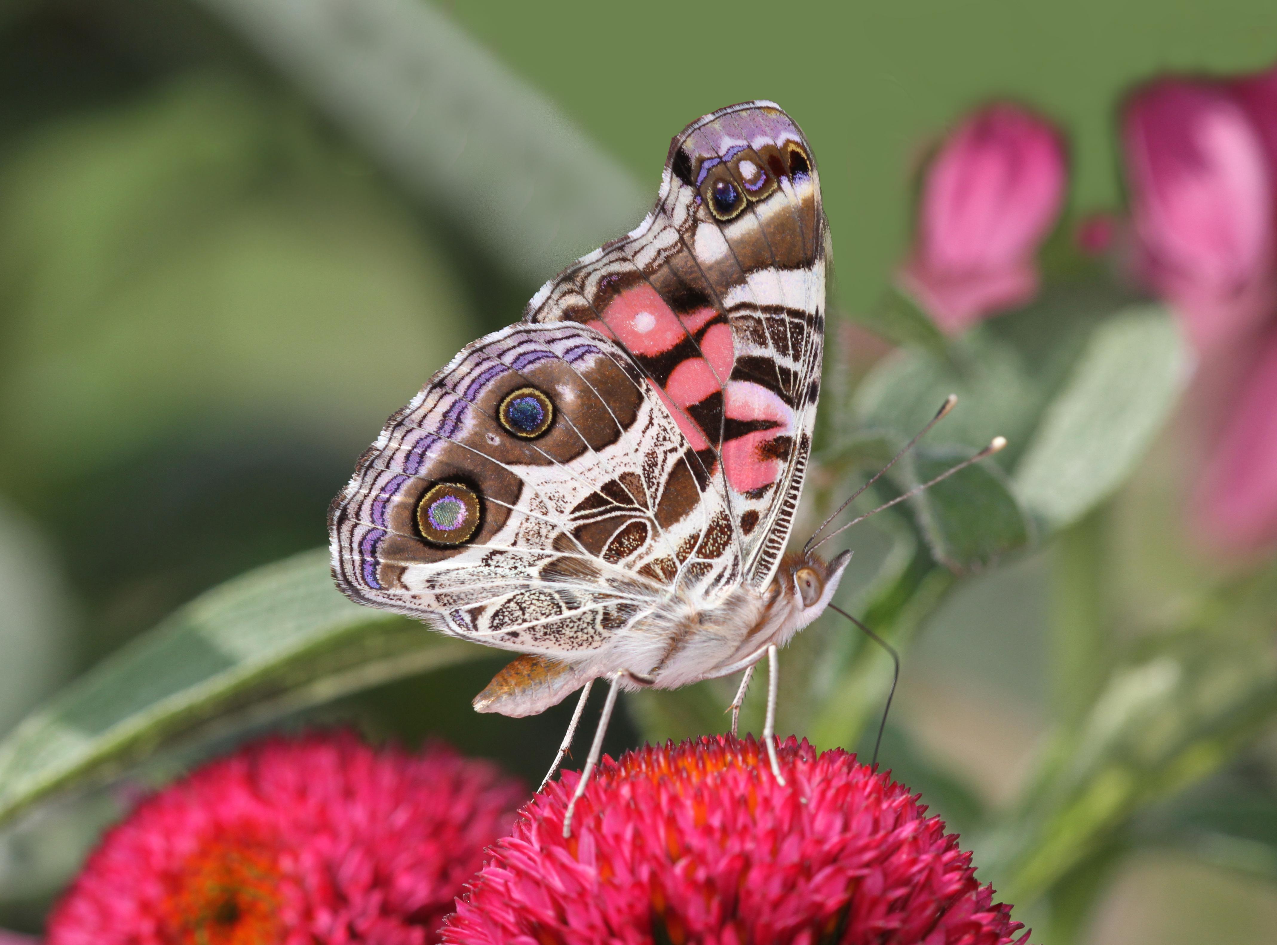 Fashion Fragile: Beauty Bugs